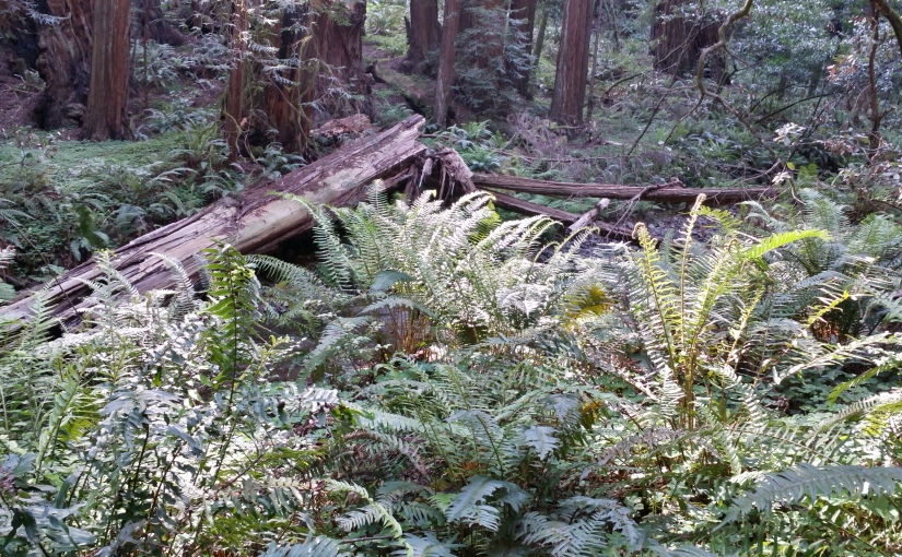 A Family Walk In MuirWoods